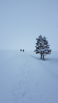 5 Lean conditions but still snow to go at, just. #winterskills #skitouring #winterclimbing